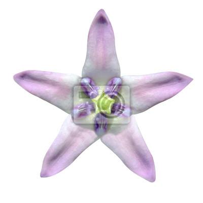 Plakat Gwiazda w kształcie egzotyczny kwiat na białym tle