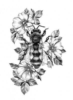 Plakat Hand Drawn Monochrome Bee among  Dog Rose Flowers