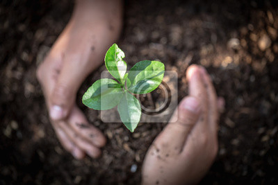 Plakat Hand protects seedlings that are growing, Environment Earth Day In the hands of trees growing seedlings, reduce global warming, concept of love the world.