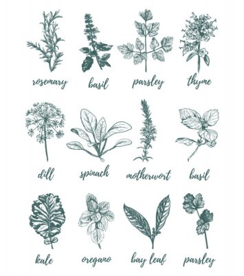 Plakat Herbs and spices vector illustration.