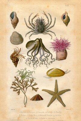Plakat Histoire naturel: Fond Marin