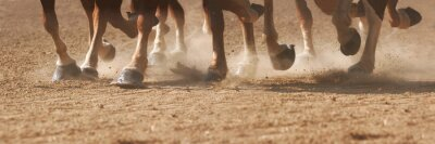Plakat Hoof Dust
