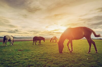 Plakat Horses on the field grass with sunset vintage and retro style