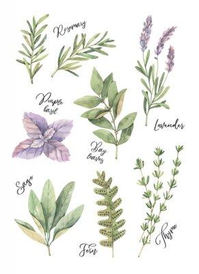 Plakat Ilustracja akwarela. Plakat z botanicznymi zielonymi liśćmi, ziołami i gałęziami. Elementy Floral Design. Idealny na zaproszenia ślubne, kartki okolicznościowe, blogi, wydruki, pocztówki