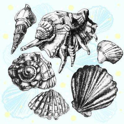 Plakat ilustracji z różnych realistycznych muszli