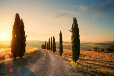 Plakat italy tuscany countryside rolling hills; summer farmland and country road;