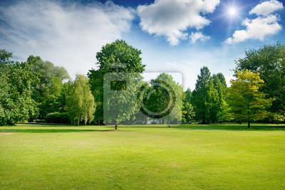 Plakat Jasne letnie słoneczny dzień w parku z zieloną świeżą trawę i drzewa.