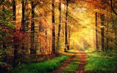 Plakat Jesień leśnej scenerii z promieniami ciepłym świetle