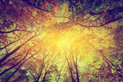 Plakat Jesień, upadek drzew. Słońce świeci przez kolorowych liści. Rocznik wina