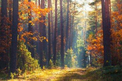 Plakat Jesienna scena leśna