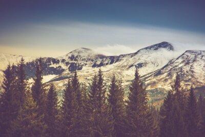 Plakat Jesienne drzewa w lesie i ośnieżone góry w oddali.
