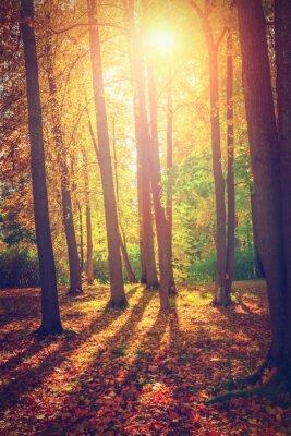 Plakat Jesienny krajobraz