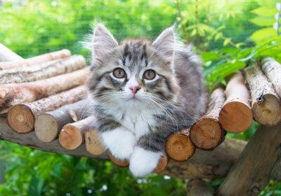 Plakat Katzenbaby w obudowie