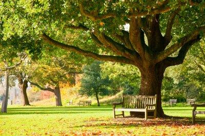 Plakat Kew Gardens Park