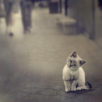 Plakat Kitten Na Ulicy
