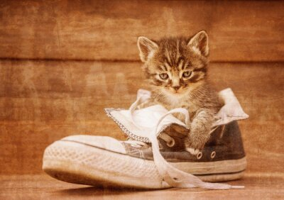 Plakat Kitten siedzi w bucie, vintage obraz