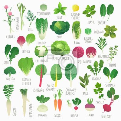 Plakat Klip Art Collection Vol.1 żywności: warzywa i zioła