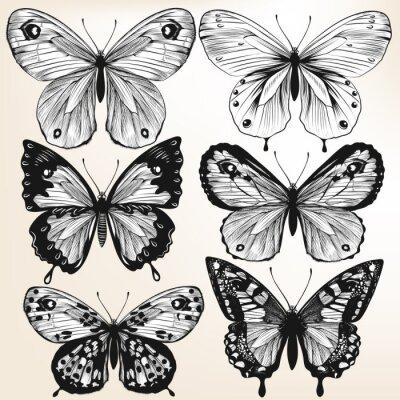 Plakat Kolekcja wektora ręcznie rysowane szczegółowe motyle dla projektu
