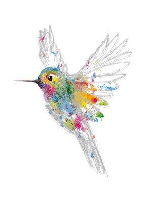 Plakat Koliber