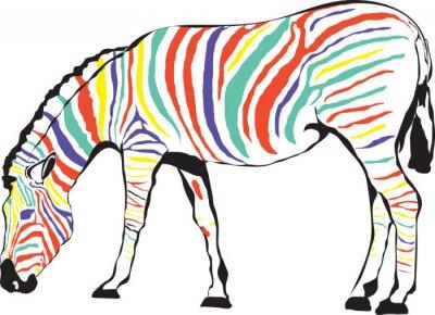 Plakat Kolorowa zebra