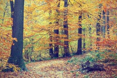 Plakat Kolorowe jesienne drzewa w lesie, zabytkowe wygląd