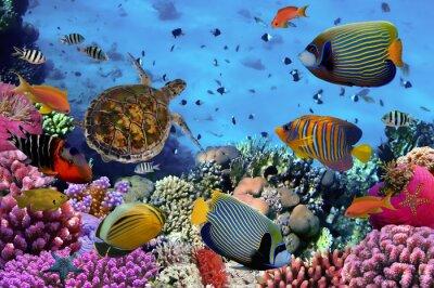 Plakat kolorowe rafy koralowej z wieloma rybami