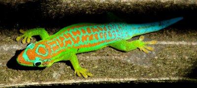 Plakat Kolorowe turkusowy zielony gekon