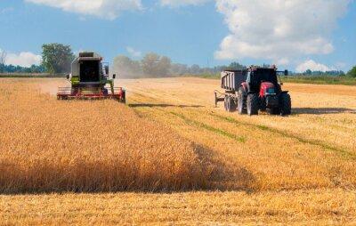 Plakat Kombajn i ciągnik zbiorów pszenicy na słoneczny letni dzień