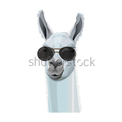 Plakat Komiczny portret lama w czarnych szkłach. Ilustracja wektorowa na białym tle