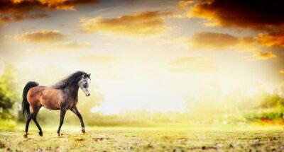 Plakat koń ogier uruchomiony kłus nad jesiennym tle przyrody, transparent