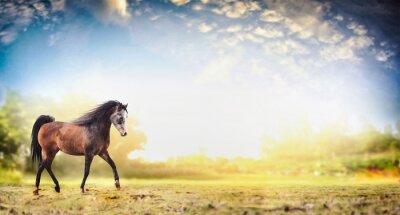 Plakat koń ogier uruchomiony kłus nad naturą tle pięknego nieba, transparent