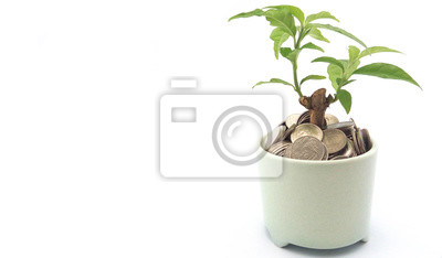 Koncepcja oszczędności pieniędzy. Drzewo rośnie w małym garnku wypełnionym monetami na solidnym białym tle.