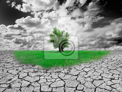 Koncepcja środowiska z drzewa i gleby suche