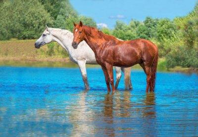 Plakat konie