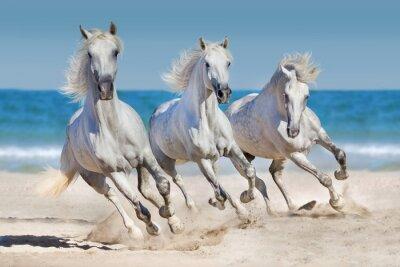 Plakat Konie biegną wzdłuż wybrzeża