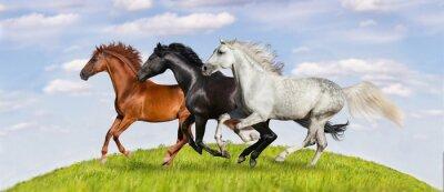 Plakat Konie prowadzony galop na zielone pastwiska przeciw piękne niebo
