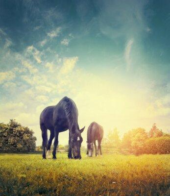 Plakat Konie wypasu w jesiennej łąki na tle drzew i niebo