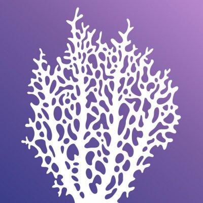 Plakat Koral