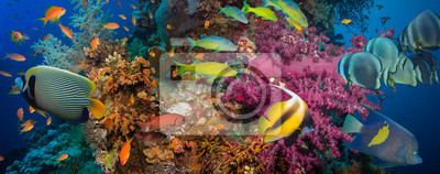 Plakat Koralowców i ryb