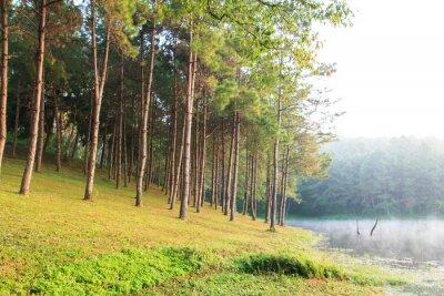 Plakat Kostium w Natural Spruce Woodland