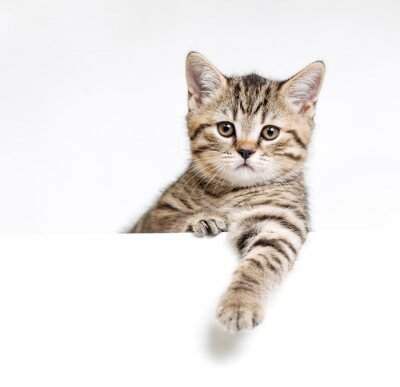 Plakat Kot lub kotek samodzielnie za biały szyld