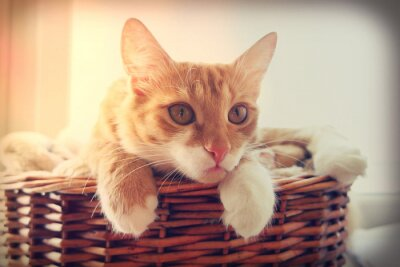 Plakat kot patrzy
