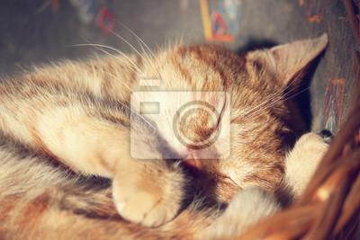 Plakat kot śpi