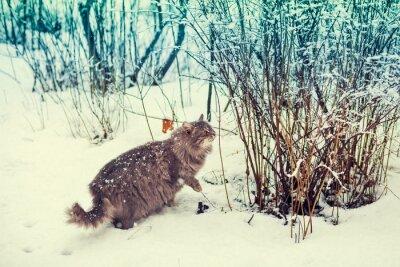 Plakat Kot syberyjski walking w snowy lasu