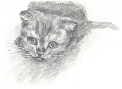 Plakat kotek czarno white.Painted ręce. styl graficzny.