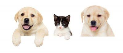 Plakat kotek i szczeniak Labrador ćwierkania