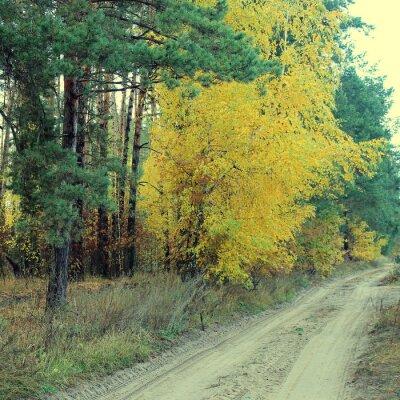 Plakat Kraj drogowego w pięknym lesie jesienią