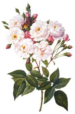 Plakat kwiat ilustracji