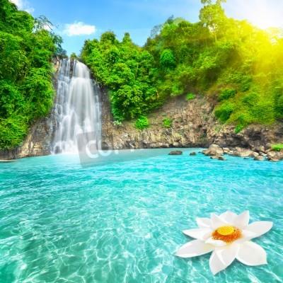Plakat Kwiat lotosu w basenie wodospadu