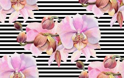 Plakat Kwiaty w akwarela. Różowe orchidee